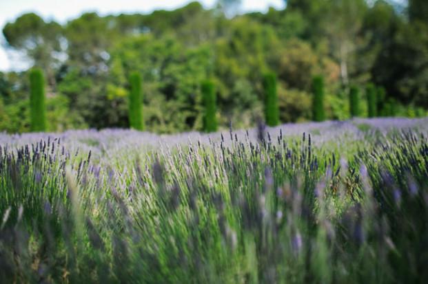 Greg Finck - Un mariage en bleu en Provence - Mas de So - La mariee aux pieds nus-12