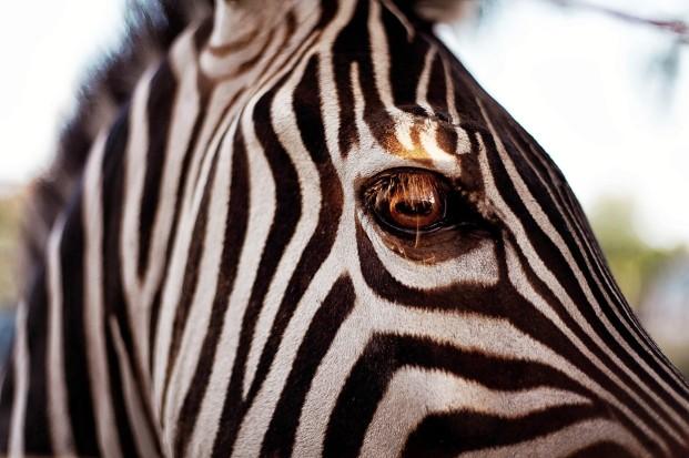 ©Chic Family Photographie - Safari chic - Shooting d'inspiration - La mariee aux pieds nus