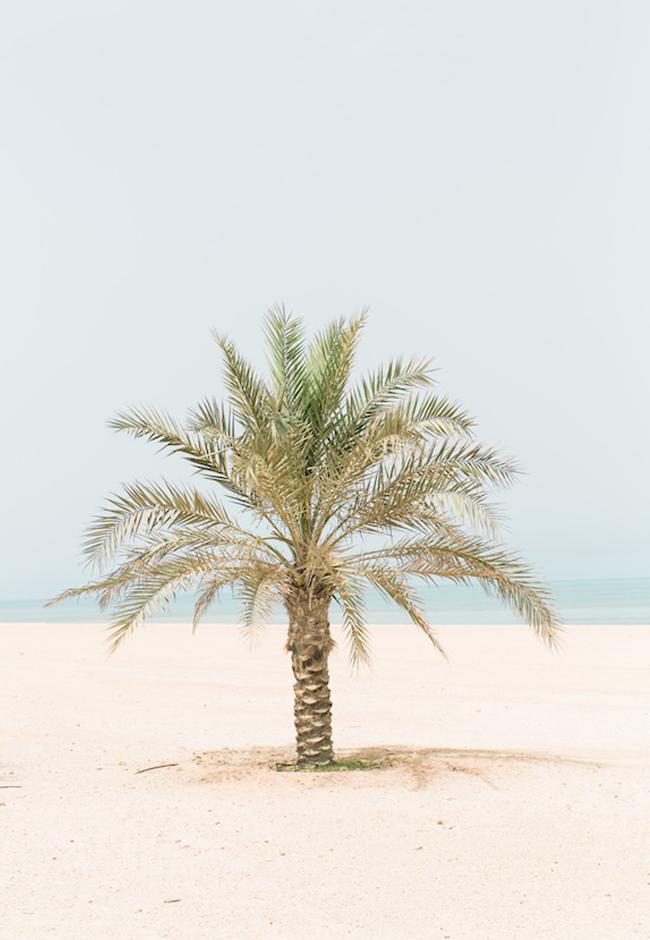 A la découverte de l'île de Sir Bani Yas à Abu Dhabi - La mariee aux pieds nus - Photo : Laila Riad