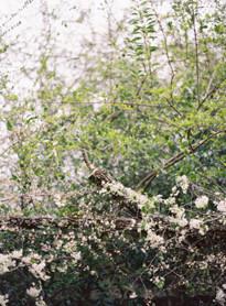 7 astuces pour rdiger ses voeux de mariage a dcouvrir sur le blog mariage www - Ecrire Ses Voeux Mariage