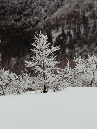 Une seance photo en amoureux sous la neige en Alsace - A découvrir sur le blog mariage www.lamarieeauxpiedsnus.com - Photos : Capyture