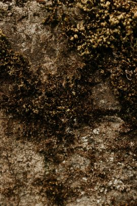 Un mariage éco-responsable au Bois Basalt en Auvergne - Photos : Anne Sophie Benoit - Blog mariage: : La mariée aux pieds nus