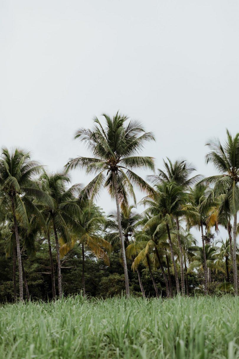 Organiser votre voyage de noces en Guadeloupe à La Toubana Hotel & Spa - Photos : Capyture - Blog mariage : La mariée aux pieds nus